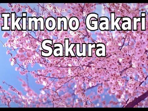 Ikimono Gakari - Sakura (Acoustic Guitar Cover W/Japanese Lyrics)