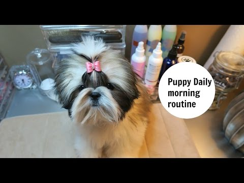 Dog Grooming puppy daily morning routine