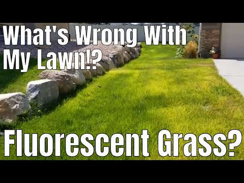 DIY how to fix neon, fluorescent, lime, light green grass. What's wrong with my lawn!?Kaynak: YouTube · Süre: 15 dakika26 saniye