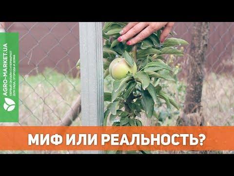 Вопрос: Какие колоновидные плодовые деревья бывают?