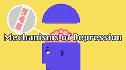 The Underlying Mechanisms of Depression