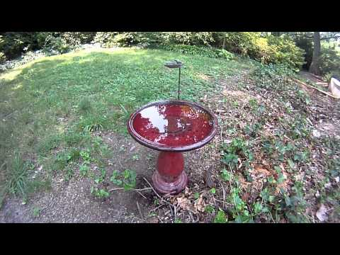Birds in my backyard<a href='/yt-w/fr-68L6LUzY/birds-in-my-backyard.html' target='_blank' title='Play' onclick='reloadPage();'>   <span class='button' style='color: #fff'> Watch Video</a></span>