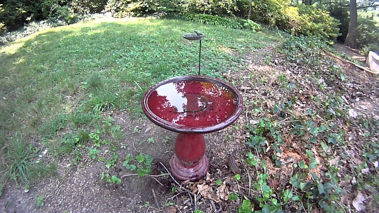 birds in my backyard youtube