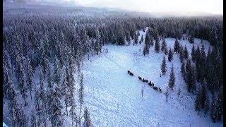 Поздравление с наступающим Новым годом от режиссёра фильма «Великий северный путь» Леонида Круглова
