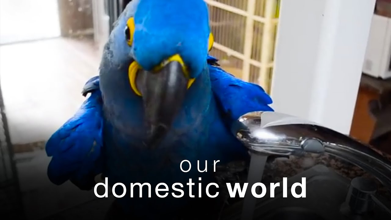 Our Domestic World: Pets Explore The Kitchen & The Backyard    The Pet Collective