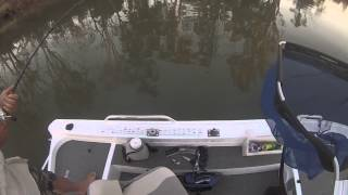 Murray Cod Fishing,  My 1st metre Cod,