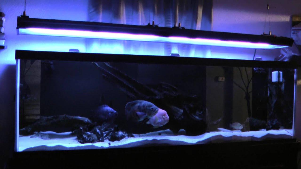 Aquaticlife T5 Ho 72 Quot 12 Bulb Light Fixture Review Youtube
