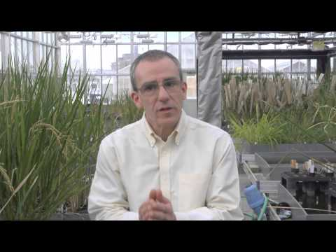 QTL Editing for Crop Improvement in Rice