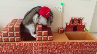ハムマリオ002( HAMUMARIO)Hamster Super Mario Bros. WORLD1-1 thumbnail