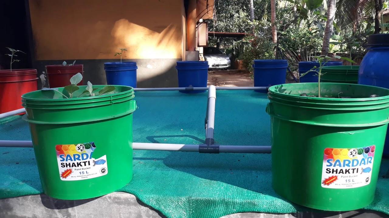 Aquaponics Meaning Malayalam Aquaponic
