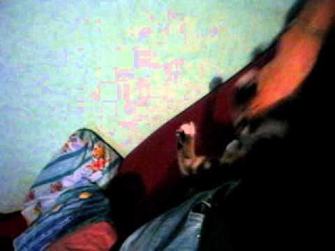 Chat fou qui mord son ma tre youtube - Chat qui dort sur son maitre ...