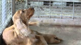 撮影日2012年9月29日 アライ畜犬牧場 www.araichikuken.com.