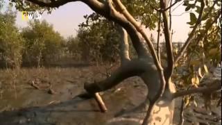 Документальный фильм Человек против монстра  2014 HD смотреть онлайн
