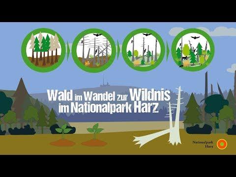 Nationalpark Harz | Nationalpark Harz