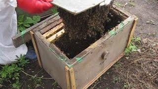 Как сделать ловушку для пчел.  Ловля роев. САМЫЙ ДЕШЕВЫЙ ВАРИАНТ