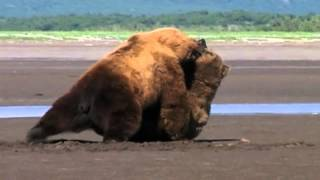 Joe Rogan on Grizzly Man