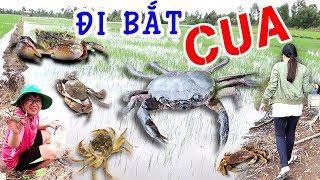 BUI VLOGS | Đi Bắt Cua nướng ăn tại ruộng ăn ngon xuất sắc - món Cua Đồng Nướng (catch crab asmr)