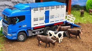 BRUDER truck COWs transport! Bruder toys 2018 NEWS | Kids video