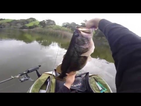 Couple Monster Bass At Lafayette Reservoir On A Float Tube HD