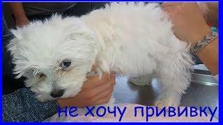 Делаем прививку щенку / Джек нашел клад / Папа говорит по-русски Cмотреть всем!