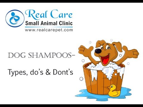 Dog Shampoos- Types, Do's & Don't & tips to select the best