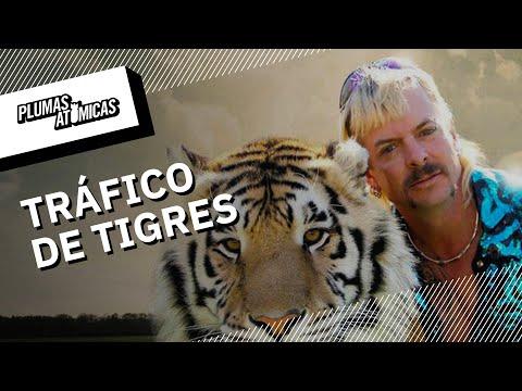 EE.UU. y el tráfico de tigres