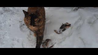 неудачная весенняя рыбалка кошки остались довольны