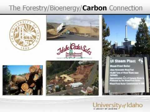 The Forestry/Bioenergy/Carbon Connection