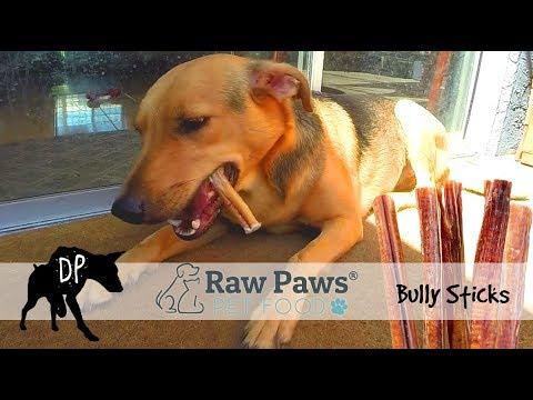 raw-paws-bully-sticks-review-|-raw-dog-treats
