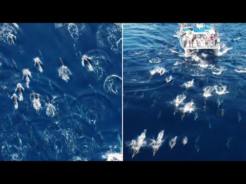 Watch this incredible 'dolphin stampede' off the coast of California