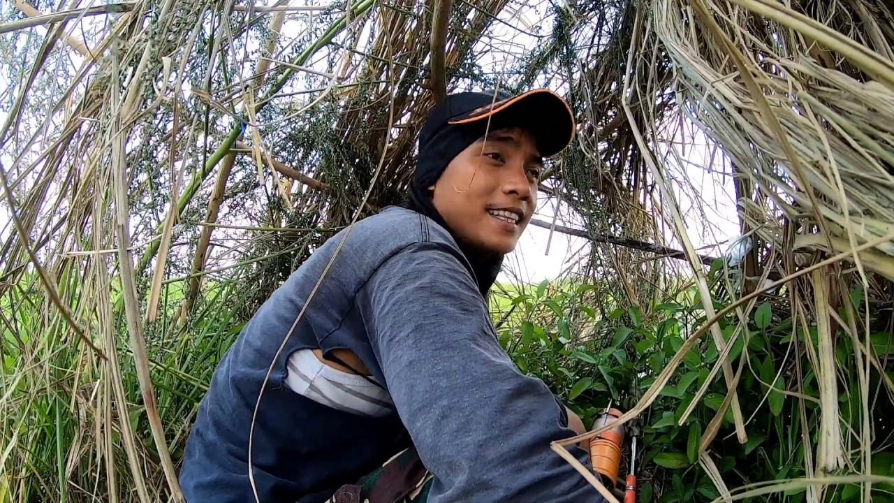 Vlog #295: UNANG HARVEST NG SITAW + MAY SINASANGLANG LUPA PANGTANIMAN | MACKI MOTO