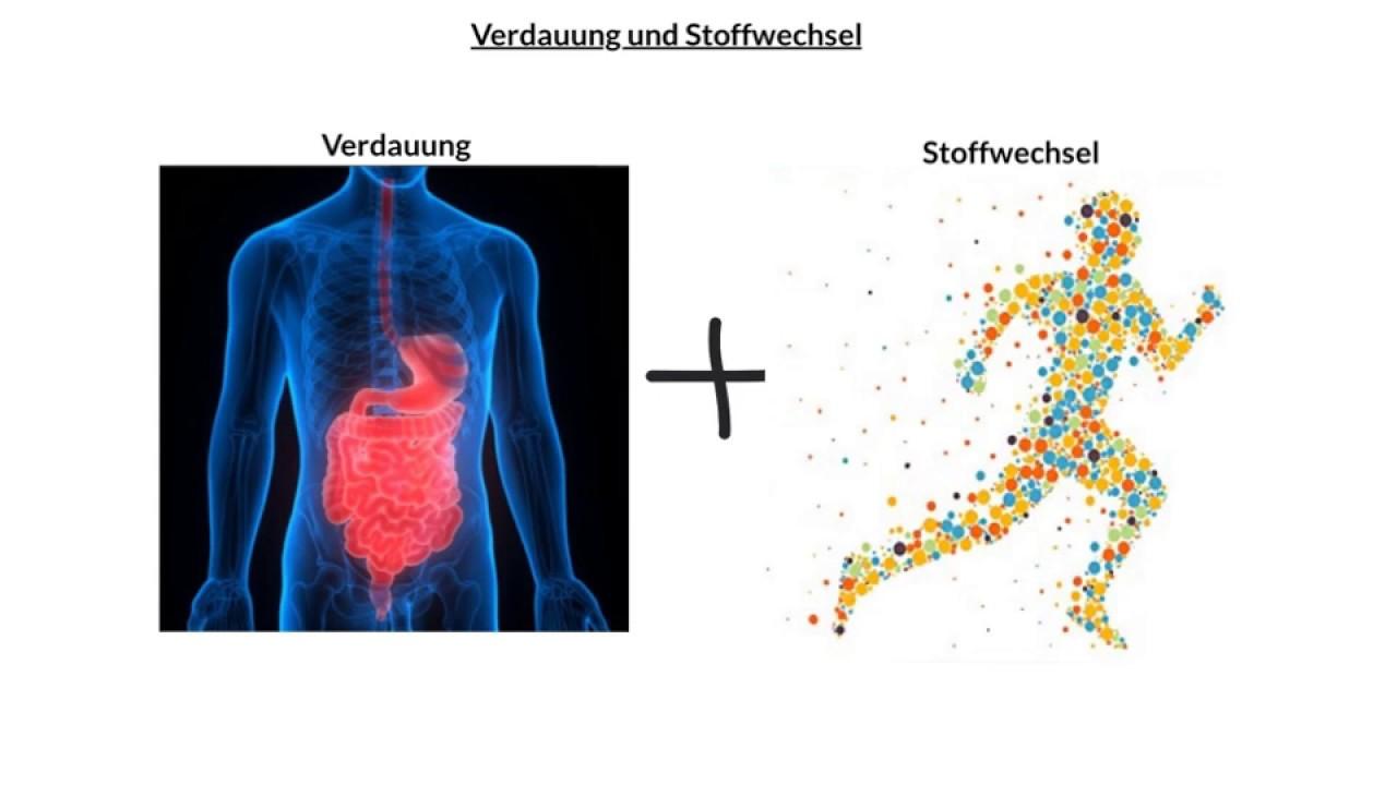 Verdauung und Stoffwechsel - Learn with us - YouTube