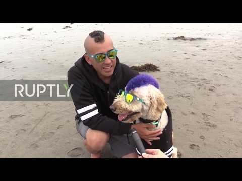 Surfs up Pooch! - Ride the waves at California's Dog Surfing Championship
