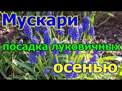 Вопрос: Что за цветок я посадила и забыла ( см)?