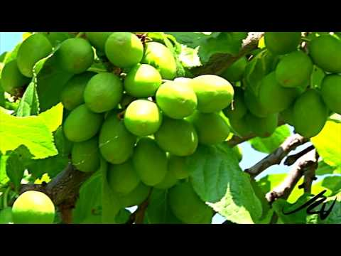 """The Canadian Garden"""" Our Fruit Trees"""" -YouTube"""