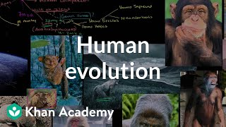 Human evolution overview | Life on earth and in the universe | Cosmology & Astronomy | Khan Academy