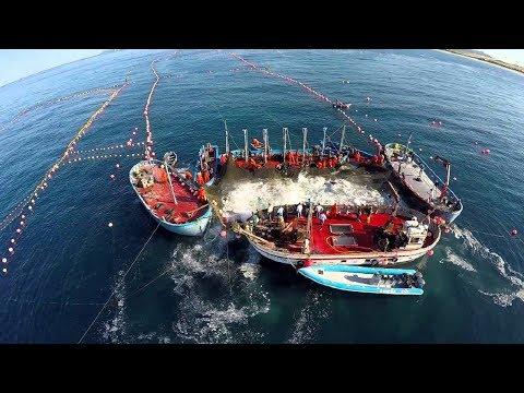 Amazing Big Fish Catching Vessel On The Sea, Big Catch Fishing Process