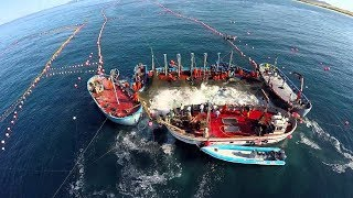 Amazing Big Fish Catching Vessel On The Sea, Big Catch Fishing Process thumbnail