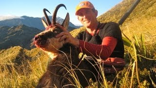 Hunting free range Chamois in the Southern Alps of New Zealand