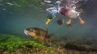 Рыбалка на кастинговую сеть испанского типа ПОЙМАЛИ УТКУ