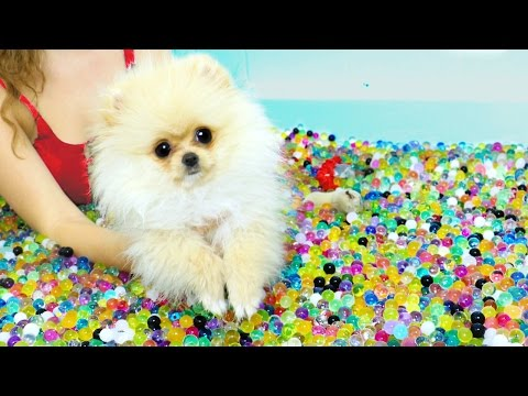 Puppies VS Orbeez Challenge!