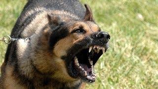 10 Surprising Dog Characteristics