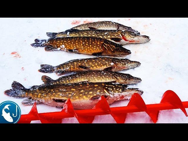 🐟 Зимняя рыбалка на жерлицы в Эстонии. Ловля щуки на живца. Открытие сезона.