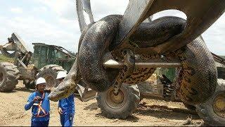 Amazonlarda Bulunan 5 İnanılmaz Hayvan