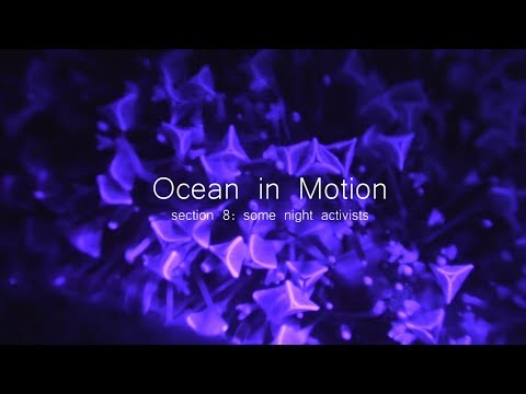 Ocean in Motion introduction