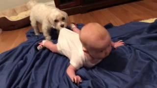 シーツの上、いきたい。にこにこする赤ちゃんと背中を引っ張る犬