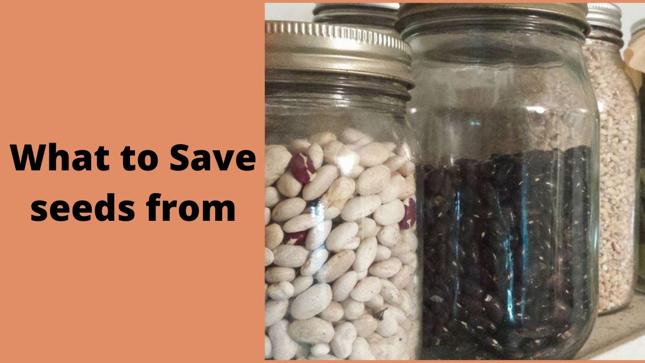 What you can save seeds from - Straight to the point