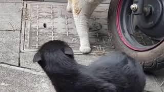 Кот застукал кошку с любовником