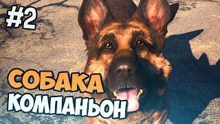Fallout 4 прохождение на русском - СОБАКА КОМПАНЬОН - Часть 2