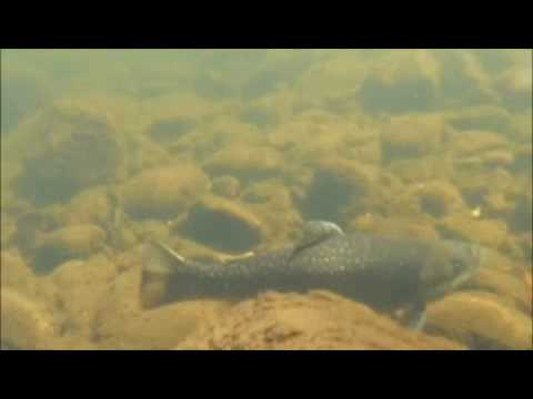 Pre-Season Fly Fishing on the Mianus River
